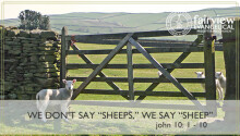 "We Don't Say ""Sheeps"", We Say ""Sheep"""
